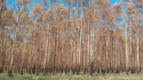 Verano: sequía y calor pueden afectar las forestaciones