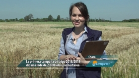 Lote primicia de trigo en Chaco