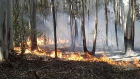Rige la emergencia agropecuaria para sector forestal de Corrientes