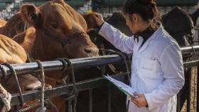 Cómo se posicionan los laboratorios veterinarios en Argentina
