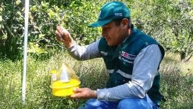 Cajamarca: Adiestramiento intensivo para erradicar la Mosca de la Fruta