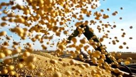 Soja: Brasil superaría las 130 millones de toneladas