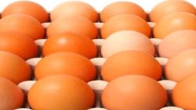 Propuesta de etiquetado de huevos por sistema de producción en Colombia