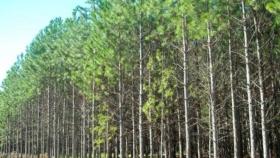 Sin el aporte de los seguros de autos para implantar nuevos bosques, hay incertidumbre sobre el presupuesto necesario para llevar adelante la política forestal