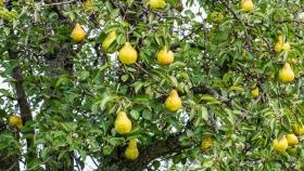 AFIP instrumentó un programa de asistencia para producción frutícola