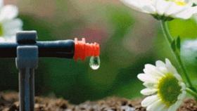 Riego por goteo optimiza uso de agua y fertilizantes