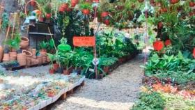 Cuidar las plantas en plena sequía: formas caseras para mantener el suelo húmedo