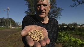Agricultura familiar: SemillAR, un programa para rescatar las semillas nativas para la producción