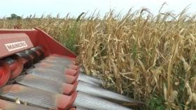 Qué hacer con los pesos agrícolas y un adelanto para la campaña 2021/22: ¿se va a sembrar?