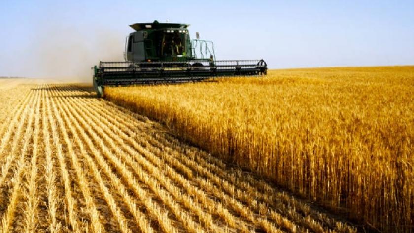 Bendita lluvia: estiman siembra récord de trigo gracias a las precipitaciones de junio