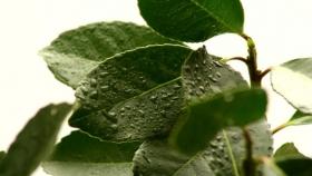 Impulsan el uso de bioinsumos para el tratamiento de la yerba mate