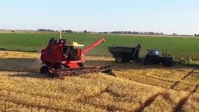 Nuestras emisiones siguen aumentando: los agricultores canadienses piden a Ottawa que invierta en agricultura sostenible