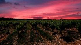 Países de la UE apoyan pedido de fondos para la vitivinicultura, con vistas al acuerdo con el Mercosur