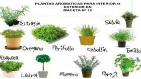 Para perfumar el jardín y la cocina: las aromáticas