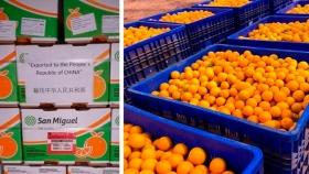 Primera exportación de naranjas jujeñas a China