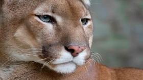 Diez animales icónicos de los parques nacionales argentinos