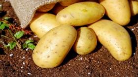 Las papas, ricas en nutrientes más allá de la cáscara