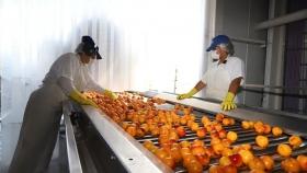 Exportarán 400.000 kilos de pulpa de durazno a Brasil