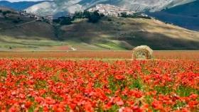 La relación entre el paisaje y nuestro bienestar