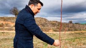 La Rioja descubre el pistacho