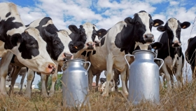 Nuevo semáforo de las Economías Regionales: signos de crisis para la actividad aviar y bovina, advertencia en el sector lechero y crecimiento del maní