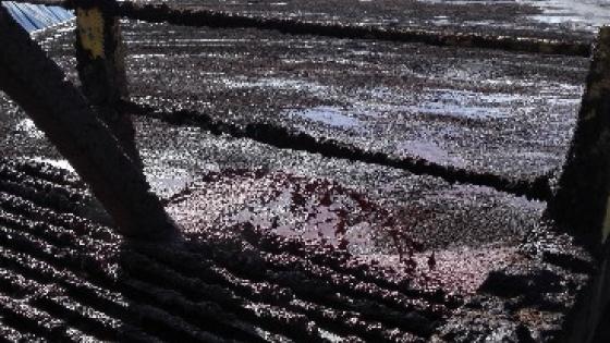 Italia busca salidas agro energéticas para el orujo de aceituna