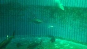 El impacto del color del ambiente en el desarrollo, crecimiento y procesos fisiológicos y bioquímicos de los peces