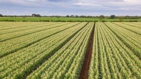 En agricultura, la I + D necesita atención, el sesgo de subsidio debe corregirse