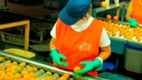 La Cooperativa Citrícola planifica proyectos de diversificación