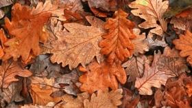 ¿Cómo convertir las hojas secas en abono o cobertores de suelo para huertas?