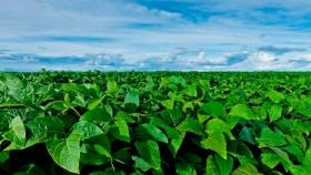 Científicos argentinos realizaron un descubrimiento mundial, clave para la soja