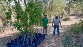 El Ministerio de Producción ya entregó más de 1.000 árboles frutales
