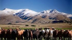 """Esteban Marín: """"Las medidas actuales impactan desfavorablemente en la ganadería pero son ciclos; hay que adecuarse y subsistir"""""""