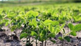 Se inició el pago de compensaciones a pequeños y medianos productores sojeros