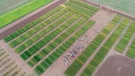 El ADN del trigo se fortalece para enfrentar la sequía