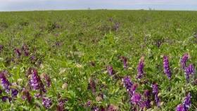 Cultivos de cobertura y sustentabilidad