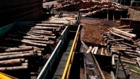 Incentivan al equilibrio ambiental y productivo en las industrias celulósicas