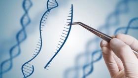 Fuera de la UE, el Reino Unido lanza consulta pública pensando en aprobar la edición genómica