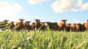 Economía circular y ganadería sustentable