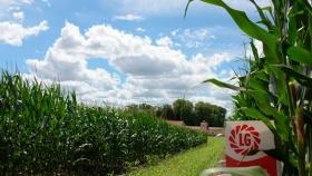 Limagrain lanzó en Expoagro su nuevo maíz con tecnología Víptera 3
