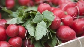 Rábano: propiedades, beneficios y valor nutricional