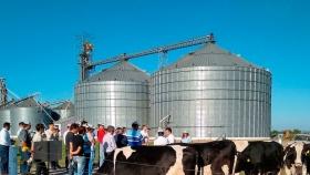 Áfiber (sin fibra): La cooperativa Lehmann diseñó un alimento especial para poder retener los terneros Holando y obtener por ellos un mejor ingreso