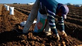 Actualizan la escala salarial para trabajadores rurales: el sueldo mínimo será de 40.000 pesos
