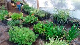 El vivero, ese espacio que provee plantas y árboles a todas las plazas de la ciudad