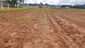 Sistema radicular diversificado evita la erosión de suelo y mejora la producción agrícola