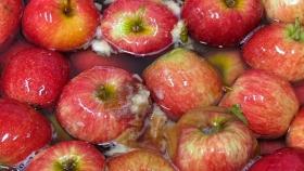 Poscosecha: la importancia de la higiene para reducir pérdidas de frutas