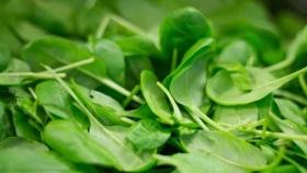 Utilizan hojas de espinacas para producir carne vacuna cultivada en laboratorio
