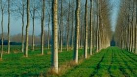 Se licuaron los subsidios forestales a causa de la caída del aporte voluntario realizado por compañías aseguradoras
