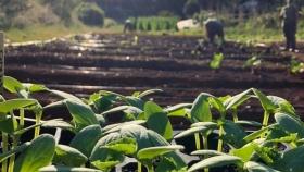 Agroecología, la agricultura de la biodiversidad