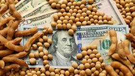 Mercado de Chicago: bajan la soja y el trigo; sube el maíz